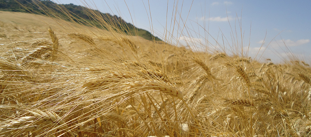 Soluciones de abonado para Cereales